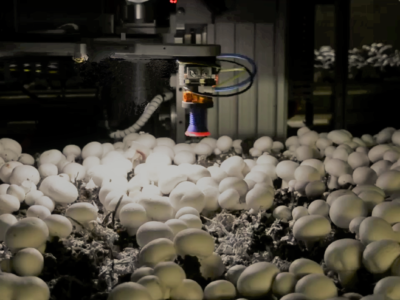 Mushroom Robot Picking Cover Image